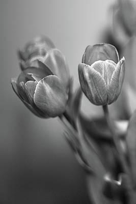 Photograph - Spring Tulips by Elvira Pinkhas