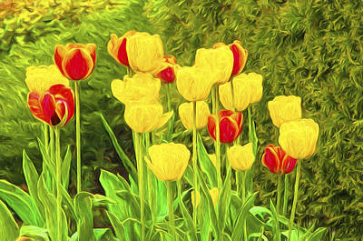 Photograph - Spring Tulips Photoart by Sharon Talson