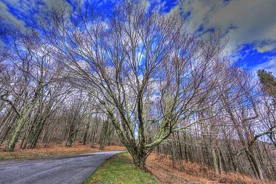 Elkton Photograph - Spring Version Of The Autumn Drive by Shannon Louder