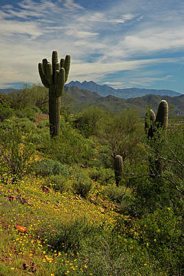 Photograph - Spring View Of Four Peaks by Sue Cullumber