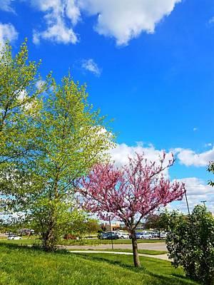 Photograph - Spring  by Vijay Sharon Govender