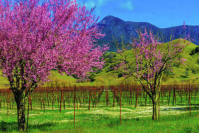Spring Vineyards And Mt St Helena Art Print by Garry Gay