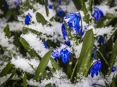 Photograph - Spring Is Coming by Joann Long