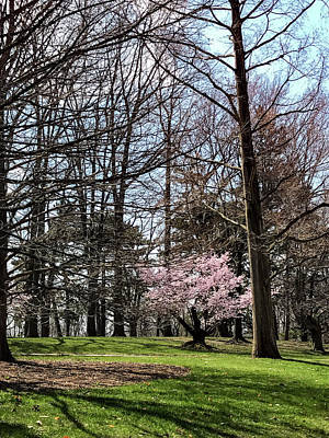 Photograph - Spring Walk On Campus by Joseph Yarbrough