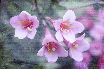 Digital Art - Spring Weigela Flowers by Trina Ansel