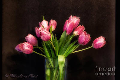 Spring Bulbs Photograph - Spring by Wendi Donaldson Laird
