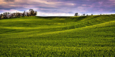 Roaring Red - Spring Wheat Field by David Patterson