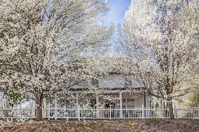 Charming Cottage Photograph - Spring Whites by Debra and Dave Vanderlaan