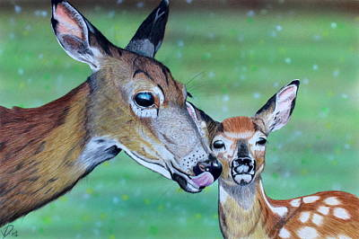 Whitetail Fawn Painting - Spring Whitetails  by Peter Van Dien
