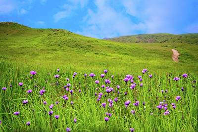 Blue Dick Photograph - Spring Wildflower Trail by Lynn Bauer