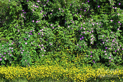 Photograph - Spring Wildflowers by Alan L Graham