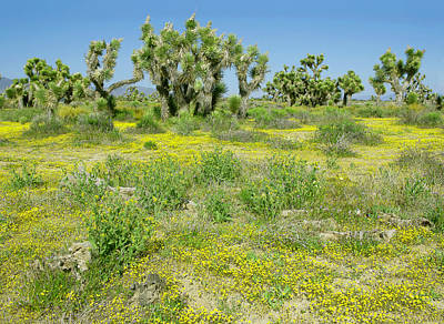 Photograph - Spring Wildflowers And Joshua Trees - Mohave Desert California by Ram Vasudev