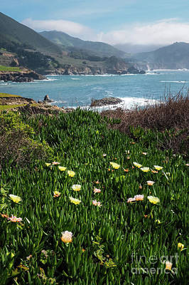 Photograph - Spring Wildflowers At Big Sur, California #30339 by John Bald