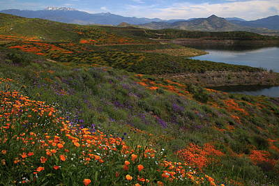 Art Print featuring the photograph Spring Wildflowers At Diamond Lake In California by Jetson Nguyen