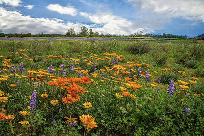 Photograph - Spring Wildflowers In Porter Ranch by Lynn Bauer