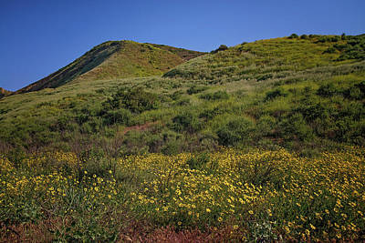 Photograph - Spring Wildflowers In The Santa Susana Mountains by Lynn Bauer
