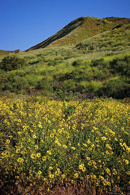 Photograph - Spring Wildflowers In The Santa Susana Mountains - Vertical by Lynn Bauer