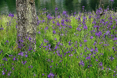 Photograph - Spring Wildflowers by Inge Riis McDonald