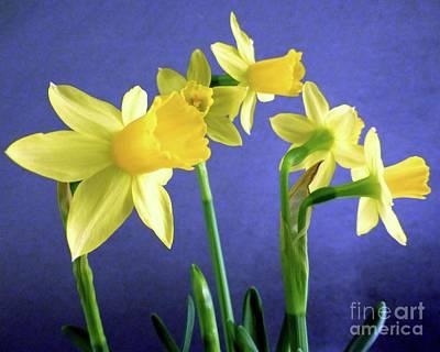 Photograph - Spring Will Come by Barbie Corbett-Newmin