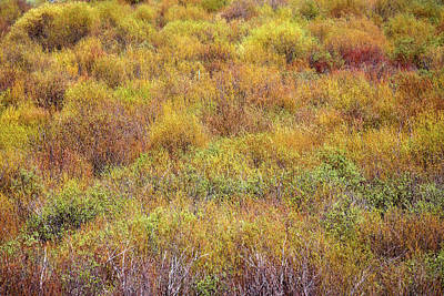 Photograph - Spring Willows by Todd Klassy
