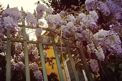 Photograph - Spring Wisteria by JAMART Photography