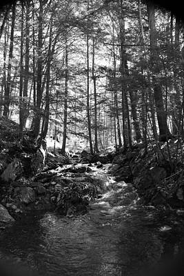 Spring Wood Original by Doug Mills