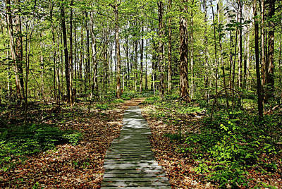 Photograph - Spring Woods by Debbie Oppermann