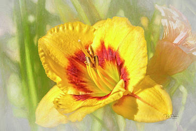Photograph - Spring Yellow by Bill Posner