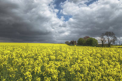 Rapeseed Photograph - Spring Yellow by Chris Fletcher