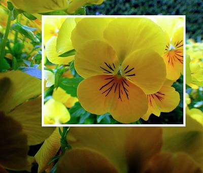 Photograph - Spring Yellow Collage by Jerry Sodorff