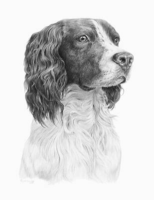 Drawing - Springer by Laurie McGinley
