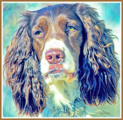 Photograph - Springer Spaniel by A Gurmankin