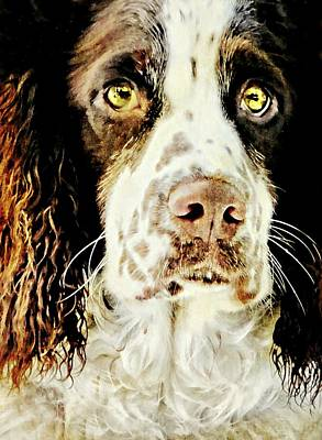 Photograph - Springer Spaniel Standard by Diana Angstadt