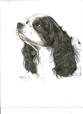 Drawing - Springer Spaniel by Bill Hubbard