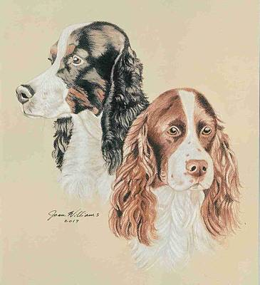 Springer Spaniels Art Print by Joan Williams