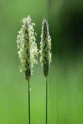 Digital Art - Springgrass by Tommytechno Sweden
