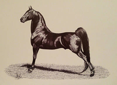 Drawing - Springmill Superstition - Morgan Stallion by Cheryl Poland