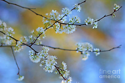 Photograph - Springing To Life by Third Eye Perspectives Photographic Fine Art