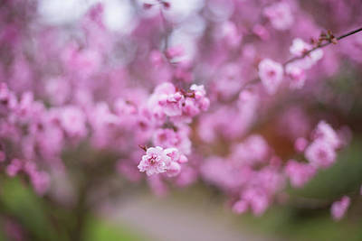 Photograph - Spring's Colors by Kunal Mehra