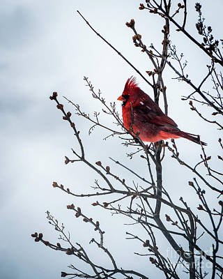 Photograph - Spring's Coming by Joann Long