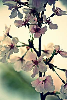 Photograph - Spring's Delicate Dance by KayeCee Spain