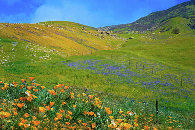 Photograph - Spring's Glory Along Bear Mountain Road by Lynn Bauer