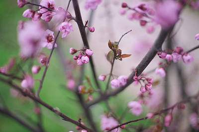 Photograph - Spring's Possibilities by Kunal Mehra