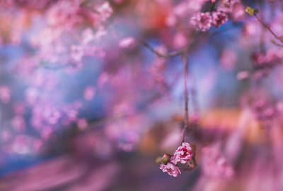 Photograph - Spring's Rhythms by Kunal Mehra
