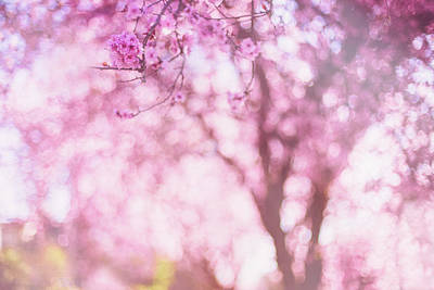 Photograph - Spring's Sunshine by Kunal Mehra