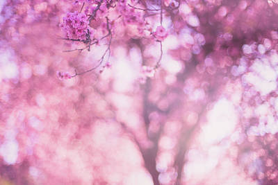 Photograph - Spring's Touch by Kunal Mehra