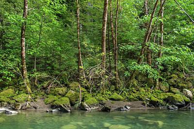 Photograph - Springtime Along Bull Creek by Greg Nyquist
