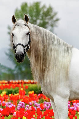 Photograph - Springtime Andalusian by Wes and Dotty Weber