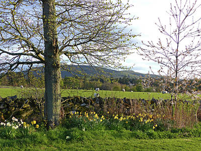 Photograph - Springtime At Ballindalloch by Phil Banks