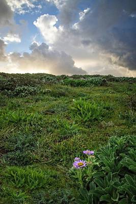 Photograph - Springtime At Fiscalini Preserve by Lynn Bauer